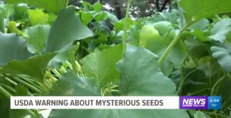 謎の種を植えてしまった男性(謎の植物)