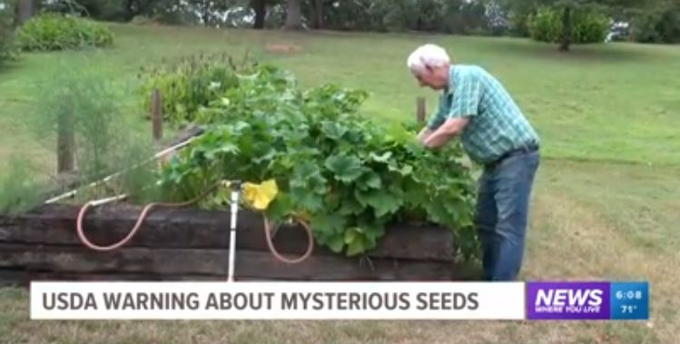 謎の種を植えてしまった男性